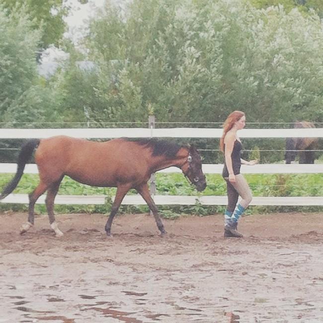 Vanmiddag lekker grondwerk gedaan met mijn lieve paardje en haar even lekker laten rennen ❤️