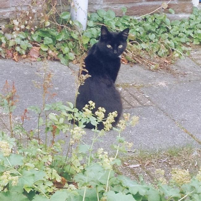Sinds afgelopen week zit lieve Bo (de kat van een paar buren) alsmaar voor ons huis ons op te wachten als we thuis komen