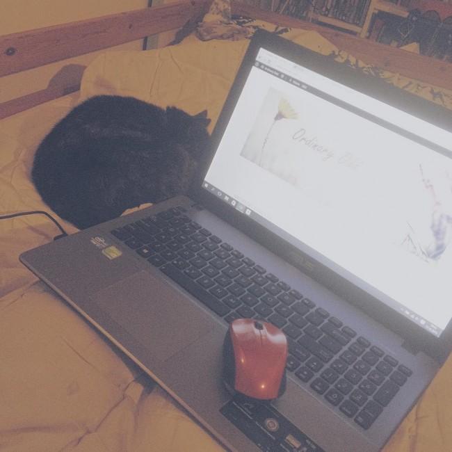 Ik voel me niet zo lekker dus zit in bed met de kat en mijn laptop. Vandaag is wel een leuke dag: ik haalde 100 abonnees op youtube, kreeg leuke mailtjes en zometeen heb ik mijn #blogreview in #blogpraat ☺️