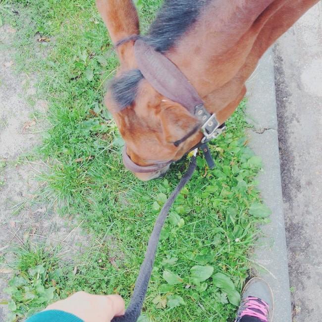 Arme paardje heeft mok en is daardoor ziekjes. Haar maar even extra vertroetelen en hopen dat het snel over gaat!