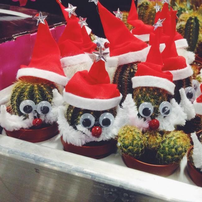 Net de kerstboom wezen halen en we kwamen deze onwijs leuke kerstman-cactusjes tegen! Hoe leuk zijn ze!?  #kerst #christmas #cactus #cute