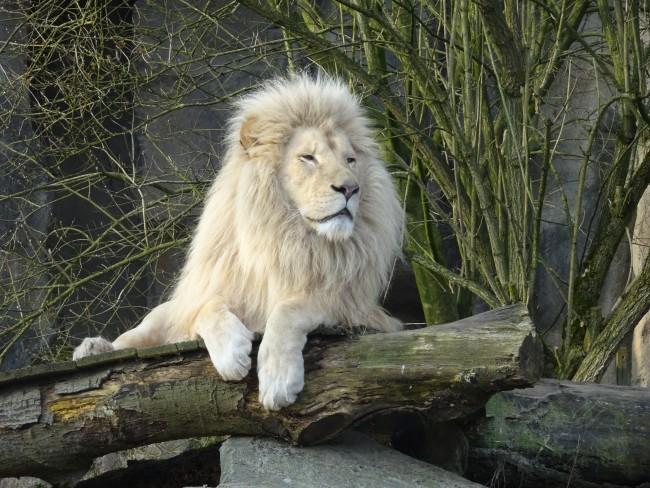 Fotografie - Een dagje dierentuin